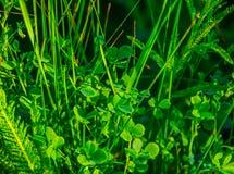 Grama verde bonita Fotos de Stock Royalty Free