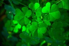 Grama verde bonita Imagem de Stock