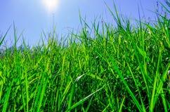 Grama verde bonita Imagem de Stock Royalty Free