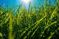 Grama verde bonita Imagens de Stock