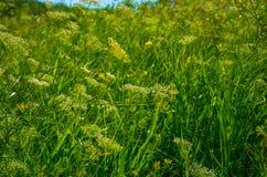 Grama verde bonita Fotos de Stock
