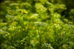 Grama verde bonita Fotografia de Stock Royalty Free