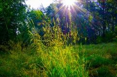 Grama verde bonita Fotografia de Stock