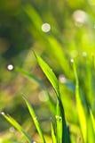 Grama verde bonita em detalhe imagens de stock royalty free