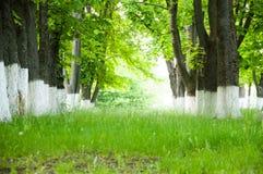 A grama verde-clara grossa do dia de verão cresce no parque Em ambos os lados cresça grandes árvores verdes fotografia de stock