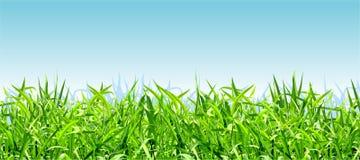 Grama verde-clara grossa em um fundo do céu azul Imagem de Stock Royalty Free