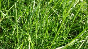 Grama verde Close-up Fundo fotos de stock royalty free