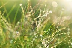 A grama verde com água deixa cair o fundo fotos de stock royalty free