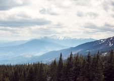 Grama verde com céu azul e montanha da neve Fotos de Stock Royalty Free