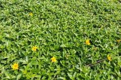 Grama verde com flor pequena Imagens de Stock