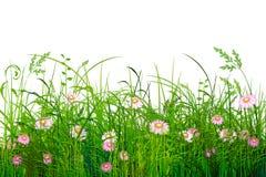 Grama verde com flores Imagem de Stock