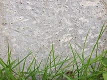 Grama verde com fundo da textura do muro de cimento Foto de Stock Royalty Free