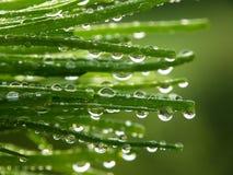 Grama verde com gotas fotografia de stock royalty free
