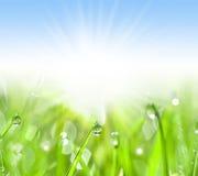 Grama verde com gotas da água imagem de stock
