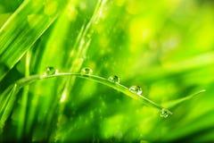 Grama verde com gotas da água Imagens de Stock