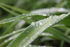 Grama verde com gotas da chuva Fotografia de Stock Royalty Free