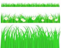 Grama verde com margarida ilustração stock
