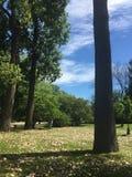 A grama verde com marrom do verão sae e árvores altas Imagens de Stock Royalty Free