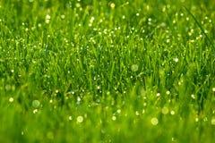 Grama verde com orvalho Fotografia de Stock Royalty Free
