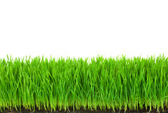 Grama verde com orvalho do solo fértil e das gotas Fotografia de Stock