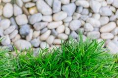 Grama verde com pedra branca imagens de stock royalty free