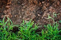 Grama verde com terra imagens de stock royalty free
