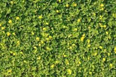 Grama verde com uma flor amarela pequena Imagem de Stock