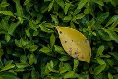 Grama verde com uma folha caída Foto de Stock