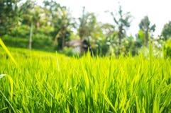 A grama verde cresce contra o contexto de uma casa solitária Fotos de Stock Royalty Free