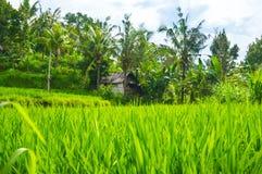 A grama verde cresce contra o contexto de uma casa solitária Fotografia de Stock