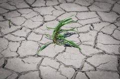A grama verde cresceu na terra rachada seca Imagens de Stock Royalty Free
