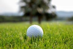 Grama verde da bola de golfe o Foto de Stock