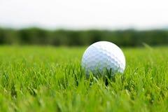 Grama verde da bola de golfe o Imagens de Stock Royalty Free