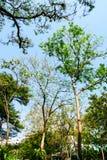 Grama verde da folha no jardim imagens de stock royalty free