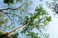 Grama verde da folha no jardim fotografia de stock