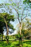 Grama verde da folha no jardim foto de stock