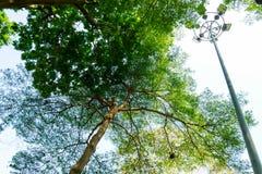 Grama verde da folha no jardim imagens de stock