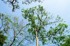 Grama verde da folha no jardim imagem de stock royalty free