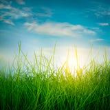 Grama verde da mola Imagens de Stock Royalty Free