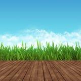 Grama verde da mola e placas de madeira com céu azul Imagem de Stock