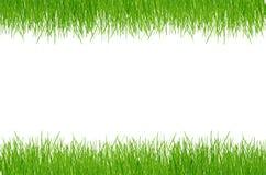 Grama verde da mola fresca Foto de Stock Royalty Free