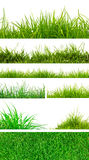 Grama verde da mola fresca. Foto de Stock