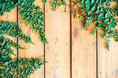 A grama verde da mola fresca e a planta da folha sobre a prancha de madeira bronzeiam o fundo da textura Imagens de Stock