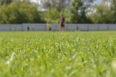 Grama verde da mola fresca no campo de futebol Imagem de Stock Royalty Free