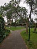 Grama verde das árvores das escolhas do trajeto da estrada transversaa nebulosa Fotografia de Stock Royalty Free