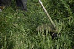 Grama verde de sega usando uma linha de pesca ajustador Fotos de Stock