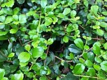 Grama verde decorada com um furo Foto de Stock Royalty Free