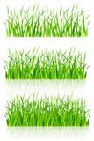 Grama verde densa Fotografia de Stock