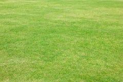 Grama verde do campo de futebol. Fotos de Stock