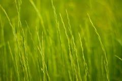 Grama verde do fundo Foto de Stock
